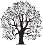 Дерево дуба Стоковые Фотографии RF