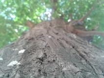 Дерево стоковая фотография