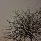 Дерево Стоковое Изображение RF