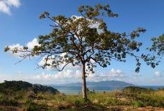 Дерево стоковое изображение