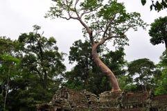 Дерево Стоковые Изображения