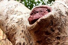 Дерево Стоковые Изображения RF