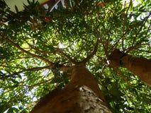 Дерево Стоковые Фото