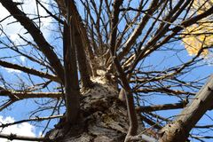 Дерево Стоковое фото RF