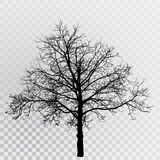 Дерево 6587 Стоковые Изображения