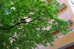 Дерево Стоковые Фотографии RF