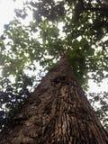 Дерево стоковая фотография rf