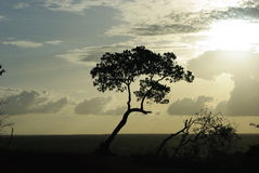 Дерево backlight Стоковые Фотографии RF