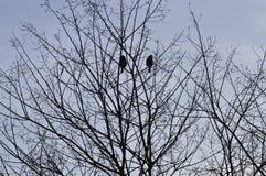 Дерево Banches и птицы Стоковая Фотография RF
