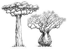 Дерево Baoba иллюстрация вектора