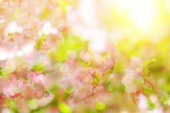 Дерево bokeh весны цветя стоковая фотография rf