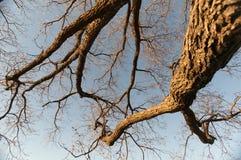Дерево Brannches Стоковое Изображение
