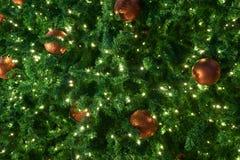 Дерево Chrismas с светом на ноче стоковые фотографии rf