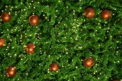 Дерево Chrismas с светом на ноче стоковые изображения