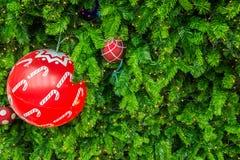 Дерево Chrismas для предпосылки Стоковая Фотография