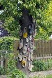 Дерево clogs Стоковые Изображения