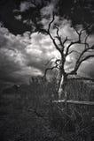 Дерево Dannahs Стоковое фото RF
