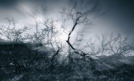 Дерево Dansing черно-белое Стоковые Изображения RF