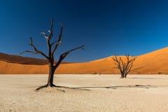 Дерево Deadvlei стоковые изображения