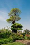 Дерево Desgn в фарфоре Шанхая парка gucheng стоковые изображения rf