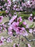 Дерево Flirting с фламенко стоковые изображения