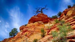 Дерево Huanted Стоковая Фотография