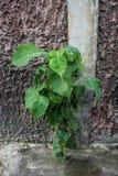 Дерево Litte растя на цементе стоковые фото