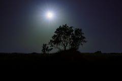 Дерево Loneley Стоковое Изображение RF
