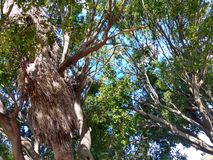 Дерево Majestuous Стоковые Изображения RF