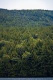 Дерево Ombre Стоковое Изображение RF