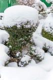 Дерево ornamental Snowy стоковая фотография rf
