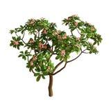 дерево Plumeria перевода 3D на белизне стоковое изображение