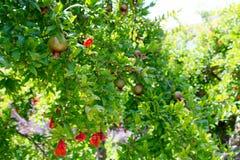Дерево Pom Стоковые Изображения