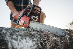 Дерево sawing рубашки шотландки бородатого сильного lumberjack нося с цепной пилой для работы на лесопилке стоковое фото rf