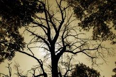 Дерево Sepia пугающее мертвое Стоковые Фото