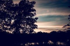 Дерево silhouetted против неба захода солнца на сумраке Реальное фотографическое изображение немножко упростило для произведения  стоковое изображение