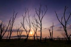 Дерево sillhouete мертвое Стоковая Фотография RF