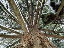 Дерево Snowy в зиме Стоковая Фотография RF