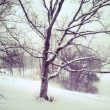 Дерево Snowy в зиме Стоковое фото RF