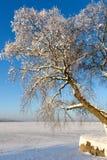 Дерево Snowy на замороженном озере i Стоковые Фото