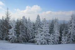 Дерево Snowy Стоковое Изображение