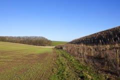 Деревца и пшеница дерева Стоковая Фотография RF