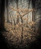 Деревце бука в древесине Стоковое фото RF