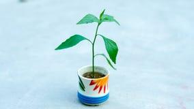 Деревце в чашке с белыми предпосылкой и влиянием B&W Стоковые Фотографии RF