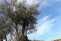 Деревьев озера Албани ландшафта плодоовощ панорама парка ablero дерева холмов горы отражения неба старых прованских внушительная Стоковые Изображения