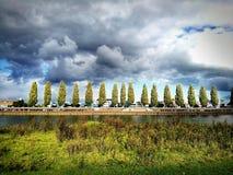 16 деревьев Стоковые Изображения RF