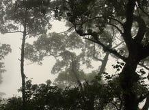 Деревья Амазонки в тумане Стоковая Фотография RF