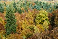 Деревья бабьего лета Стоковое Изображение RF