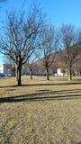 Деревья без листьев в поле Стоковое фото RF