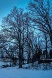 Деревья без листьев водой во время сумерк стоковая фотография rf